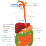 Common Causes of Heartburn